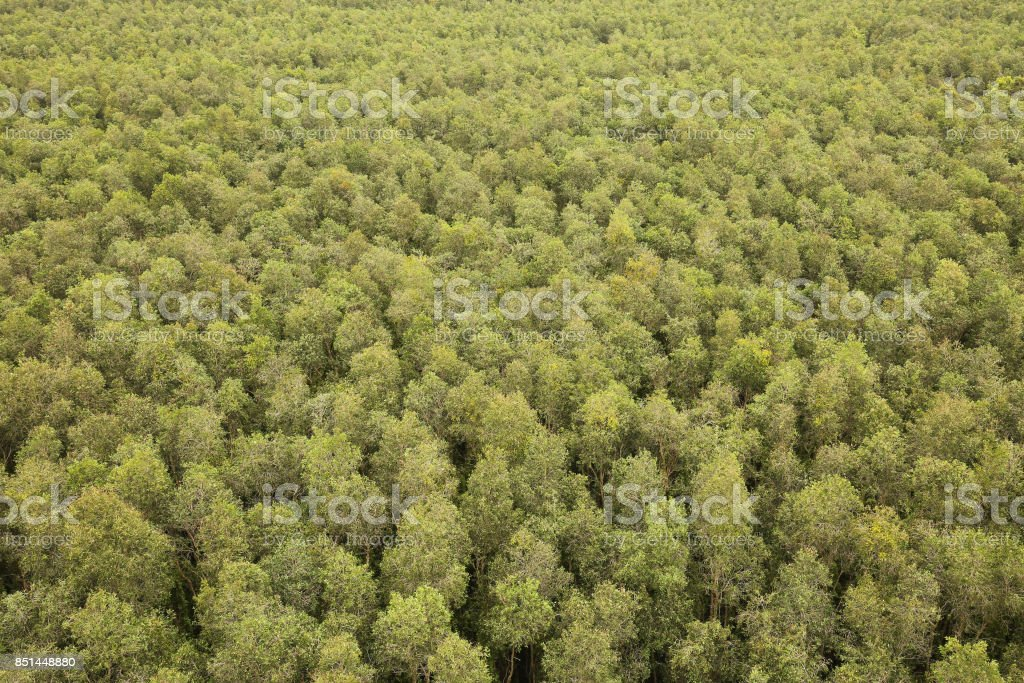 Green forest foliage aerial view woodland tree canopy nature background, Tan Lap, Long An, Vietnam stock photo