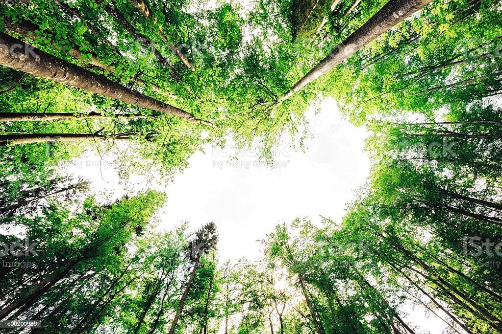 Grünen Wald von Bellow – Foto