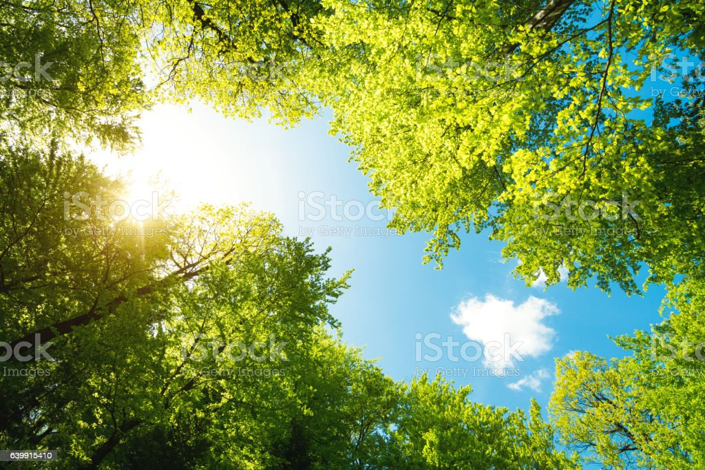 Green Forest From Below stock photo