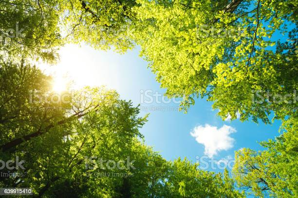Photo of Green Forest From Below