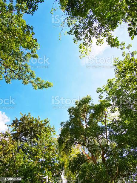 Photo of Green Forest From
