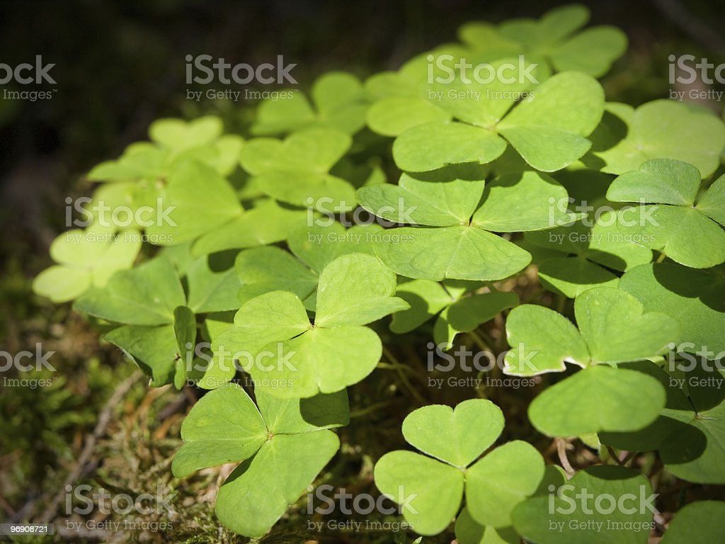 Green forest grass royalty-free stock photo