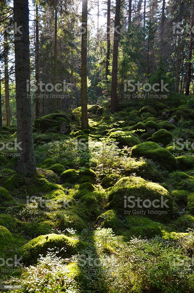 Green Forest in backlighting stock photo