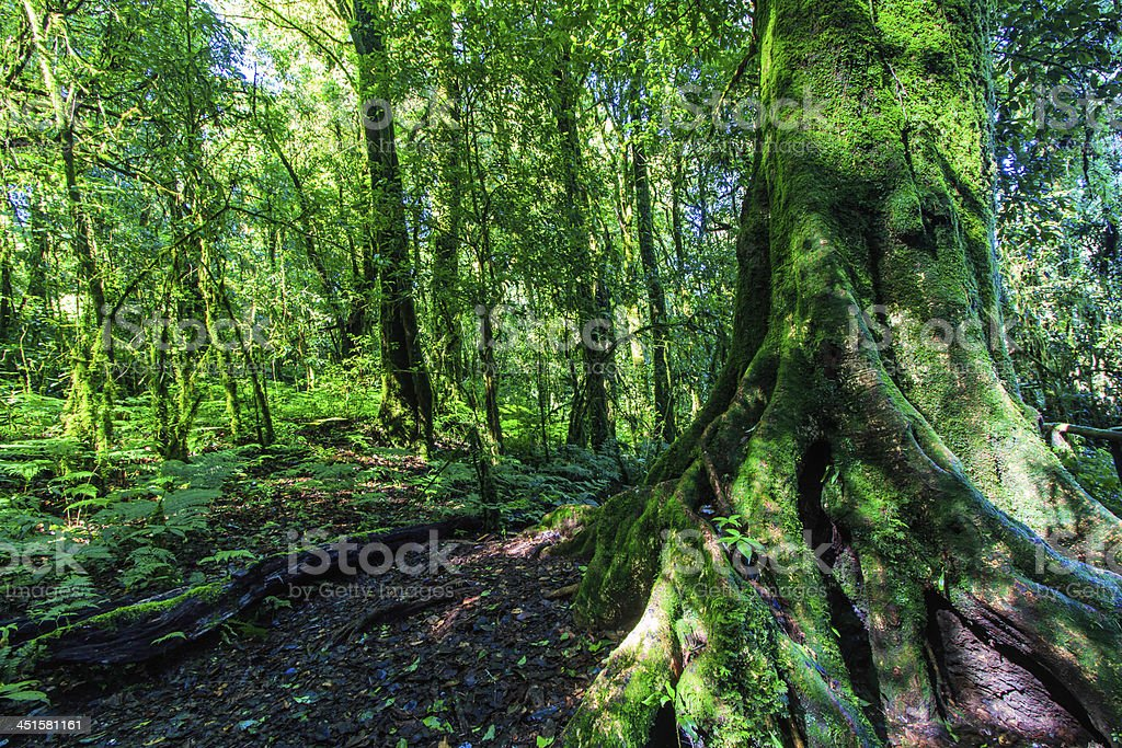 Green forest in primeval royalty-free stock photo