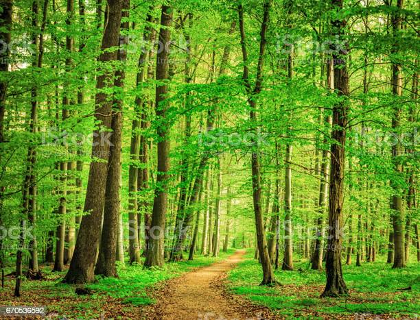 Photo of Green Forest in spring