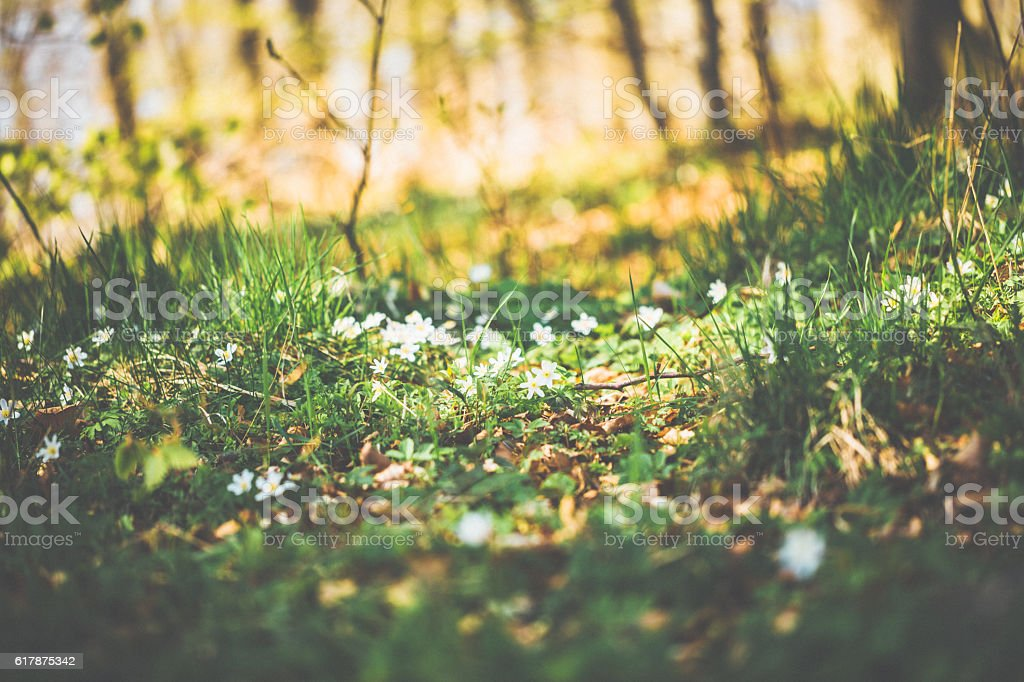 Green forest in spring with flowers stock photo