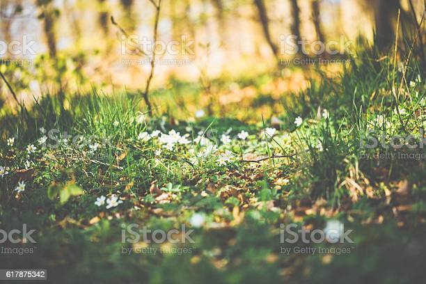 Green forest in spring with flowers