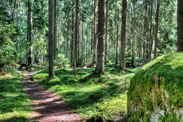 green forest landscape in the summer - naaldbos stockfoto's en -beelden