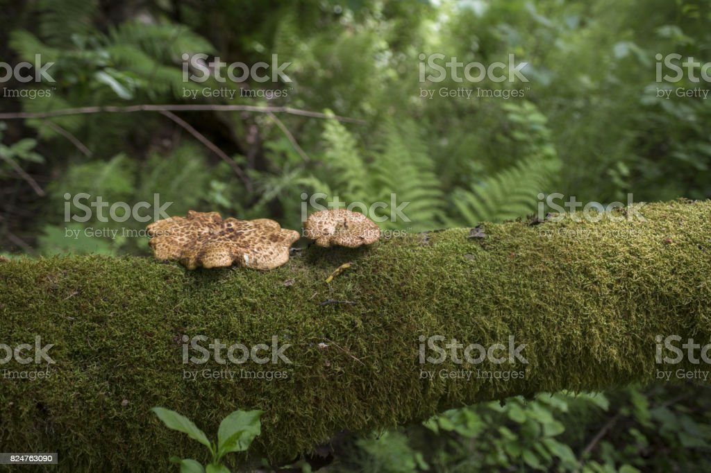 Green forest mushrooms fern moss royalty-free stock photo