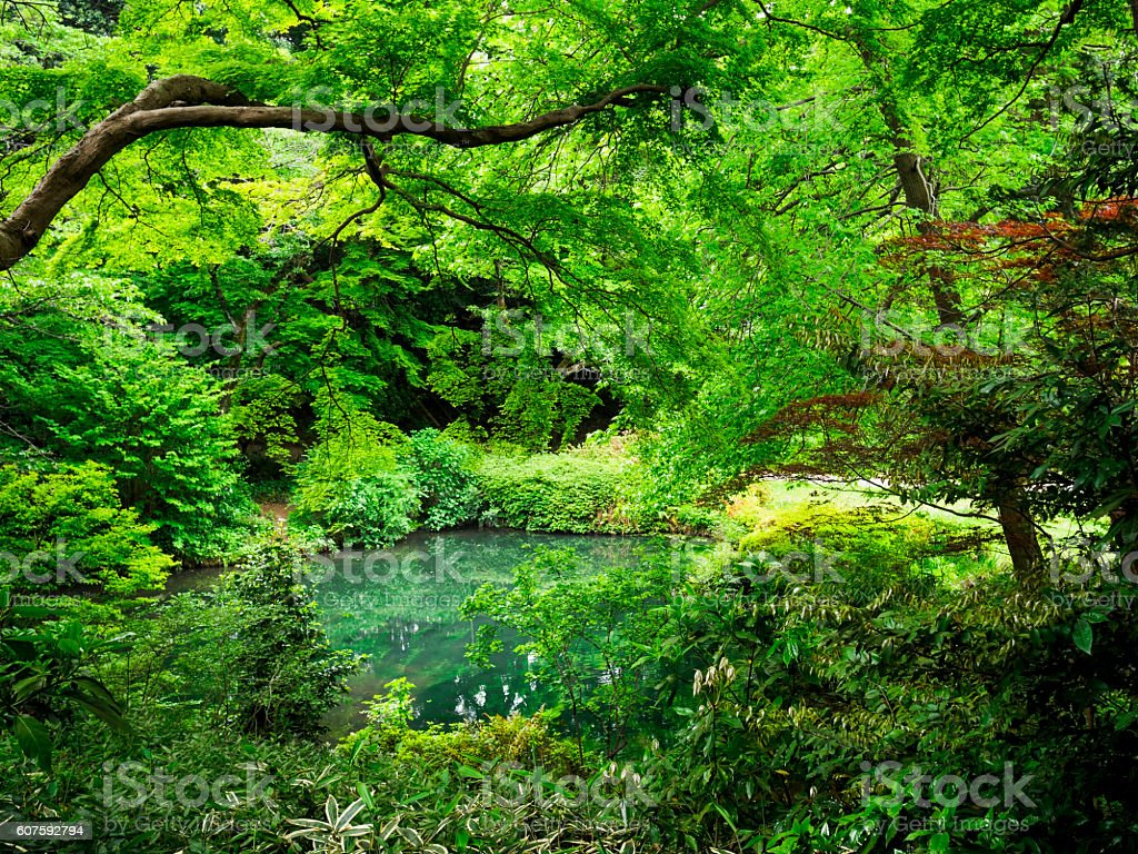 Green forest of the small pond ストックフォト