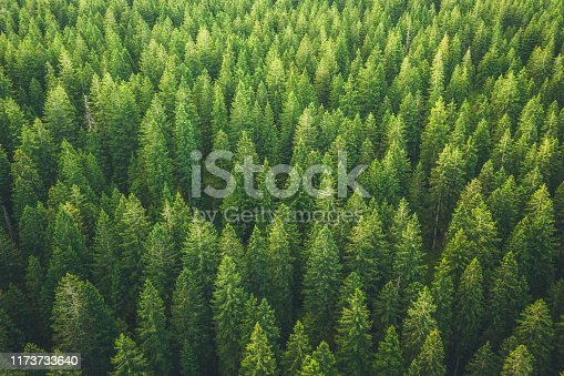 Aerial view on green pine forest.