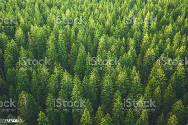 Green forest picture id1173733640?b=1&k=6&m=1173733640&s=612x612&h=hnf903fsf80arruauzw0mjiizx2plthlvsfehuq8ts4=