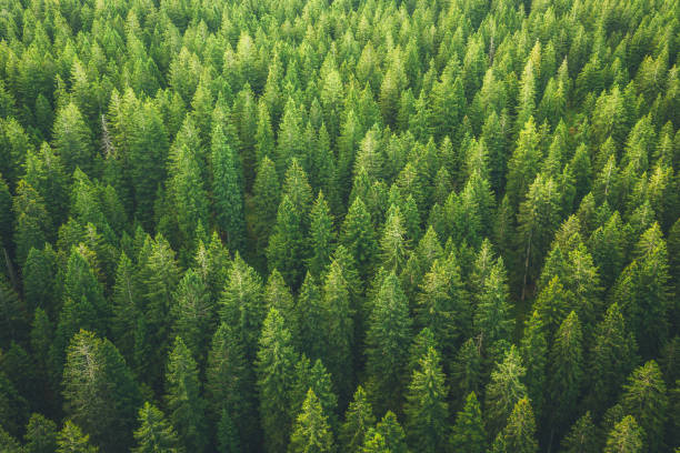 Green Forest Aerial view on green pine forest. environment stock pictures, royalty-free photos & images