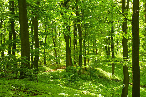 Green forêt - Photo