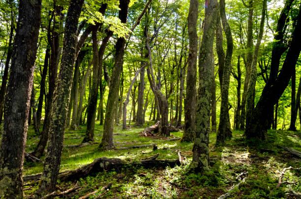 Bosque verde  - foto de stock
