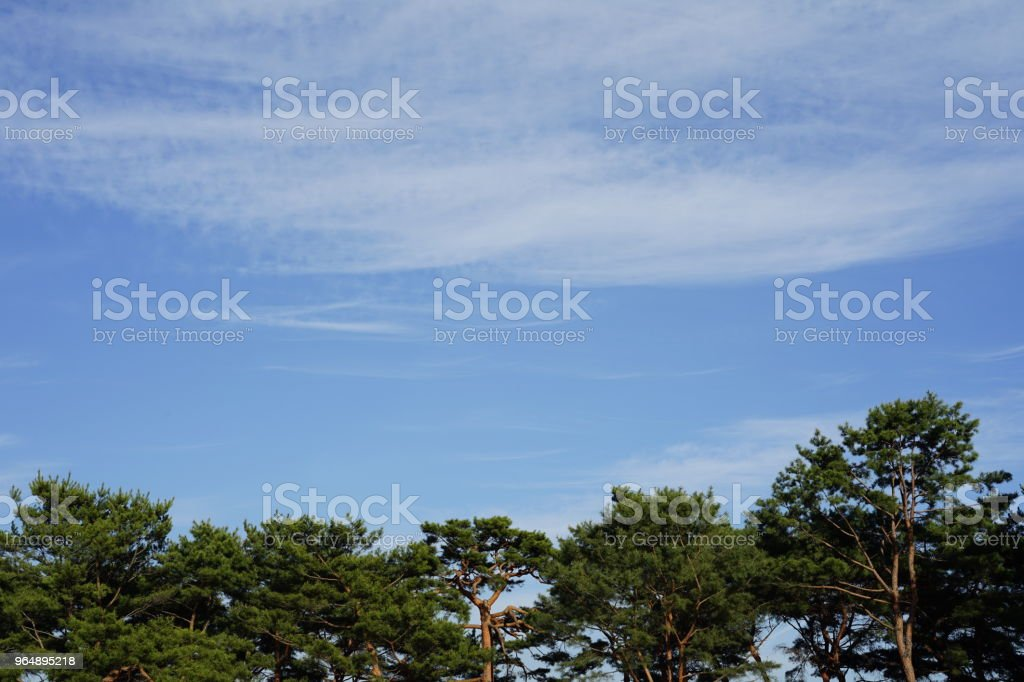 A green forest royalty-free stock photo
