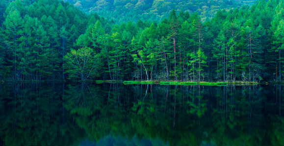 Green forest reflected in calm lake