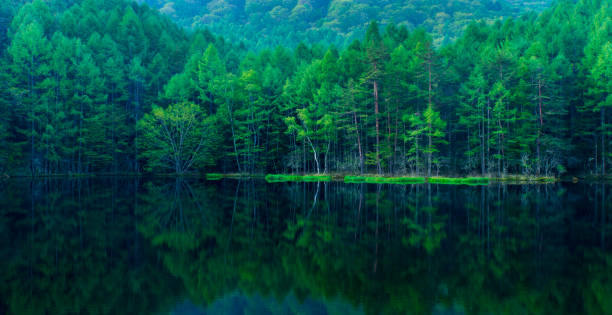 Green forest reflected in calm lake stock photo