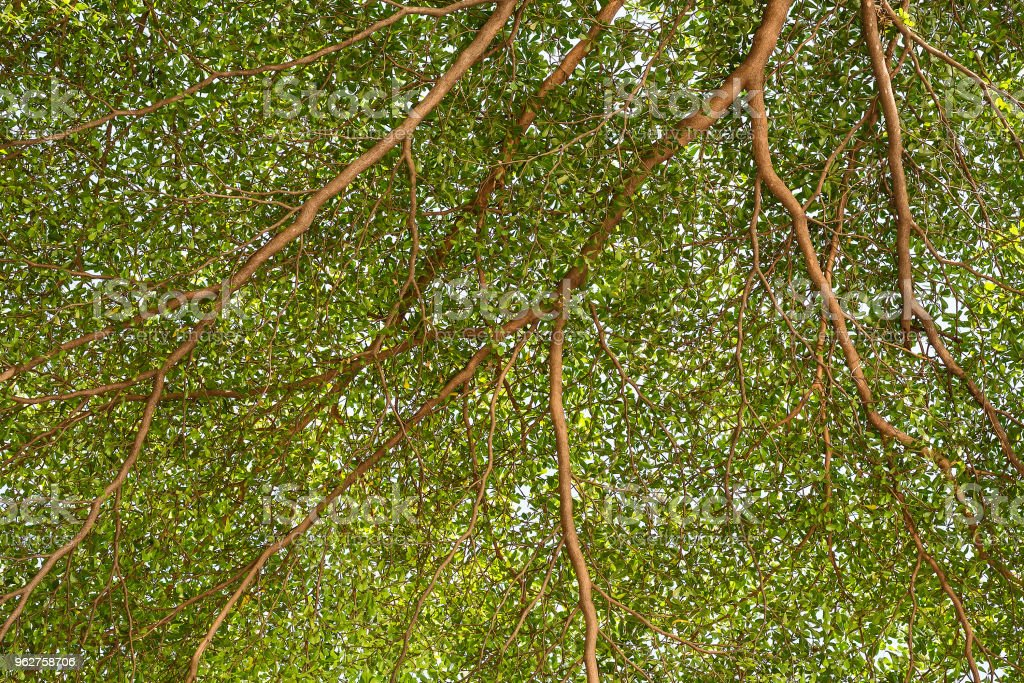 green forest trees backgrounds. stock photo