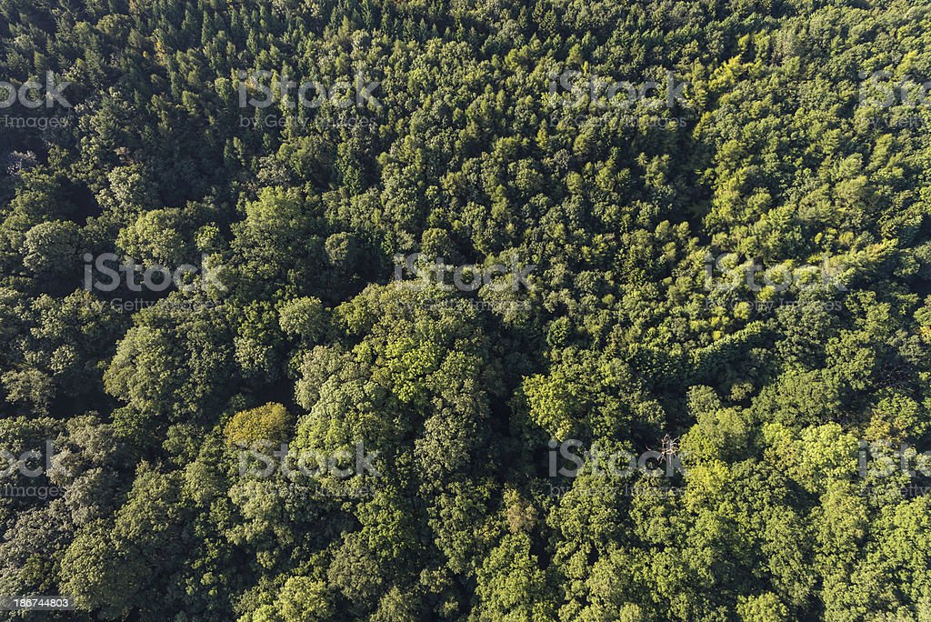 Green forest trees woodland foliage from aerial view high above royalty-free stock photo