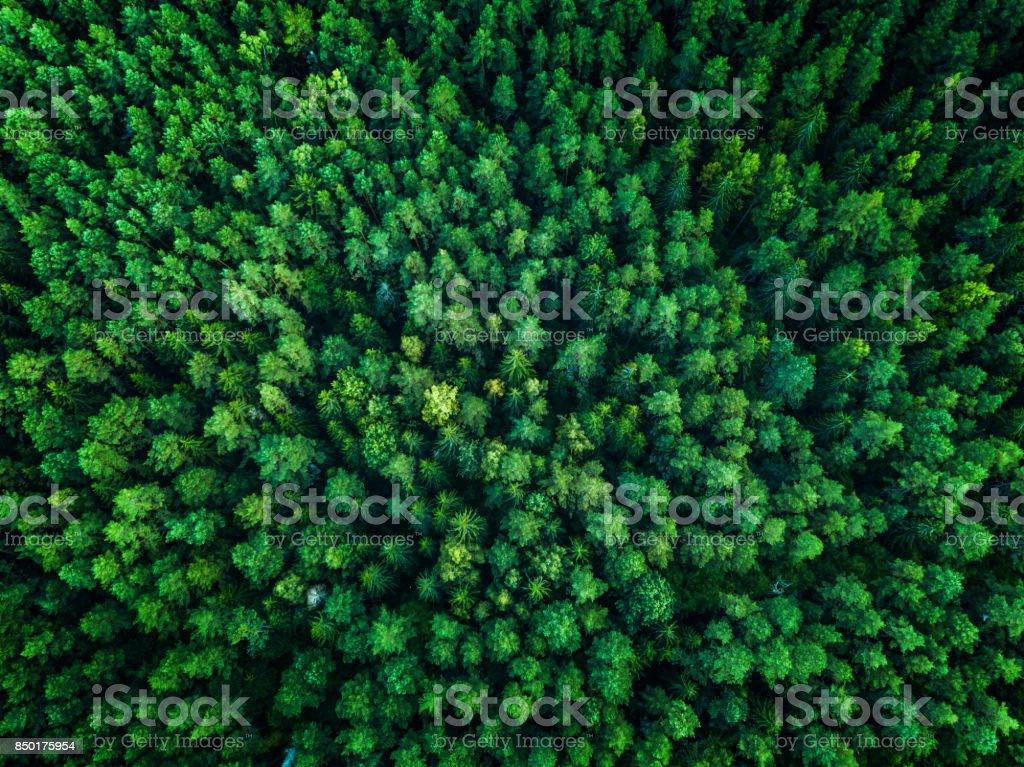 Green Forest, Ansicht von oben, Ansicht von oben, getönt – Foto