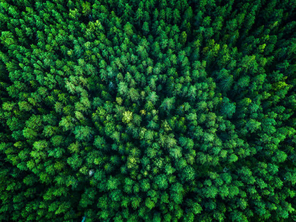 Green Forest, view from above, top view, toned stock photo