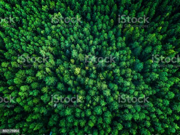 Photo of Green Forest, view from above, top view, toned
