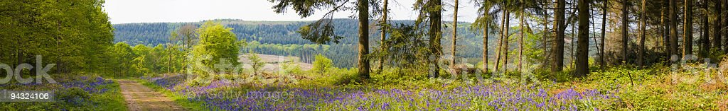 Green forest vista royalty-free stock photo