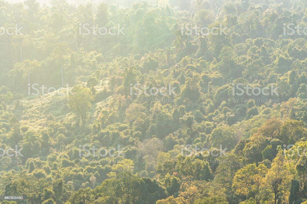 Green forest with ray of lights on the morning stock photo