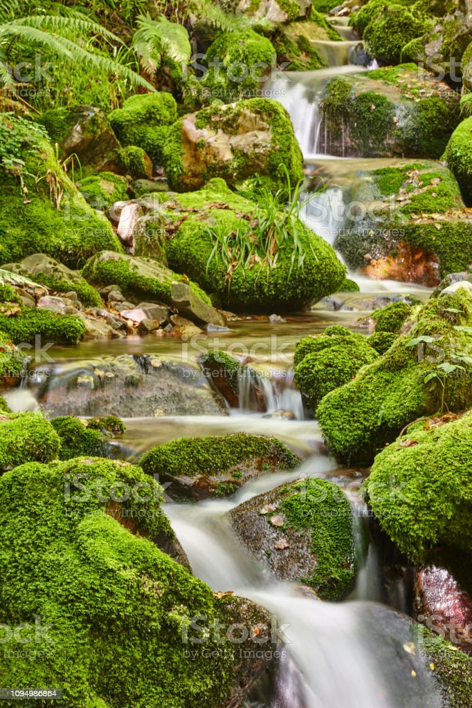 Reserva de floresta verde com fluxo na biosfera de Muniellos, Astúrias - foto de acervo