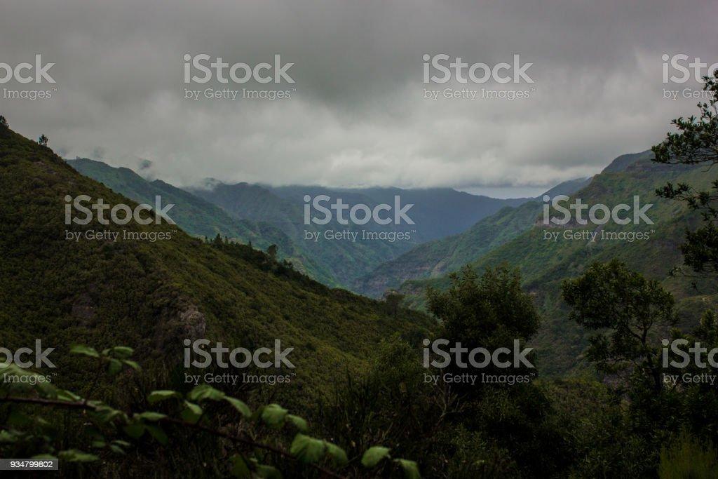 마데이라의 녹색 숲입니다. 마데이라 섬에 산에서 열 대 숲 - 로열티 프리 0명 스톡 사진