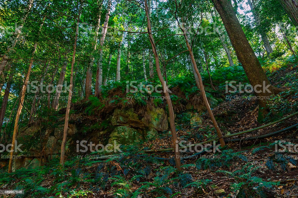 Green forests stock photo