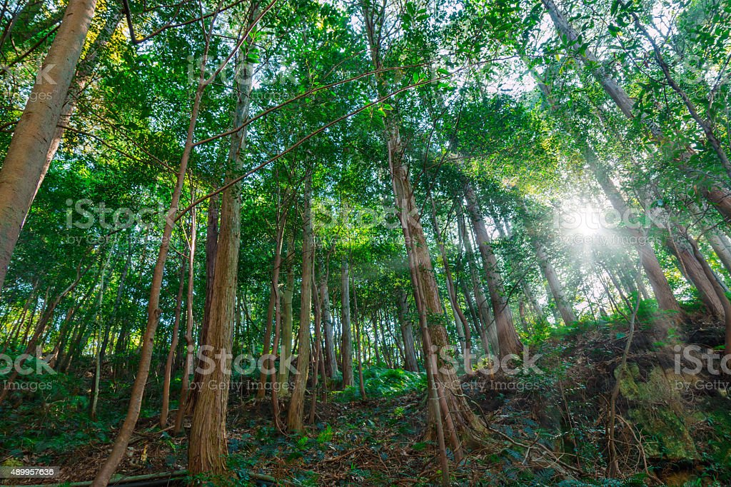 Green forests. stock photo