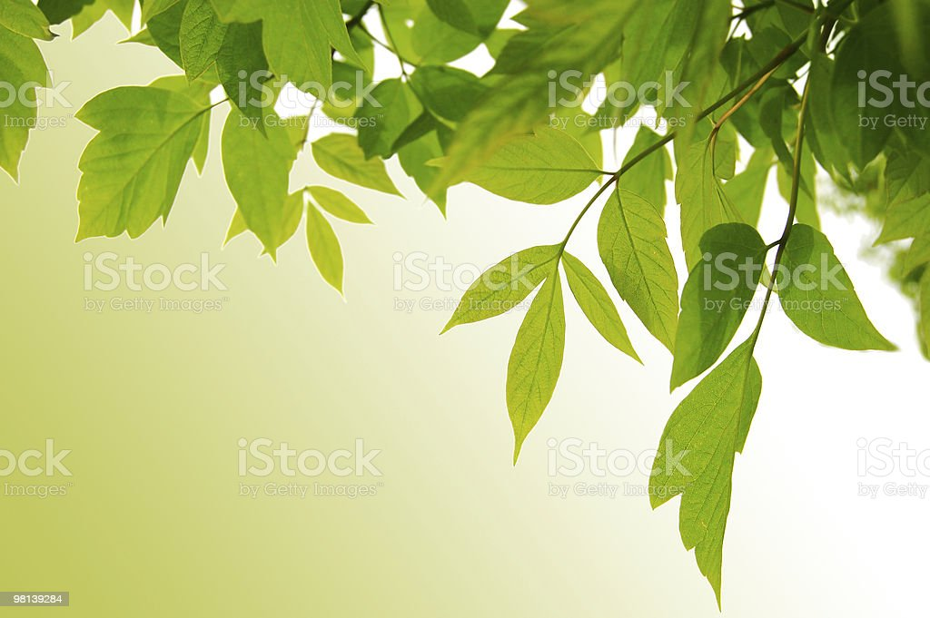 Green frame of leaves royalty-free stock photo