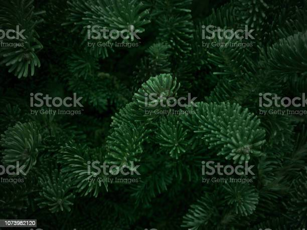 Photo of Green Fraser Fir Christmas Texture Background