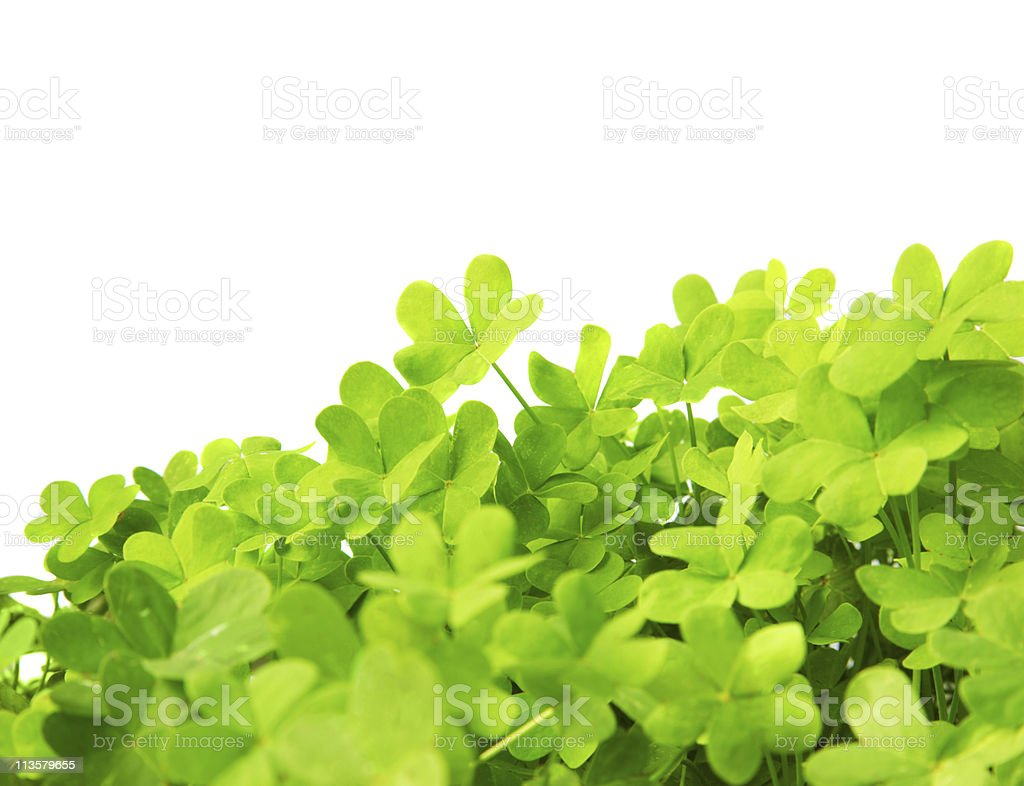 Green fresh clover border stock photo