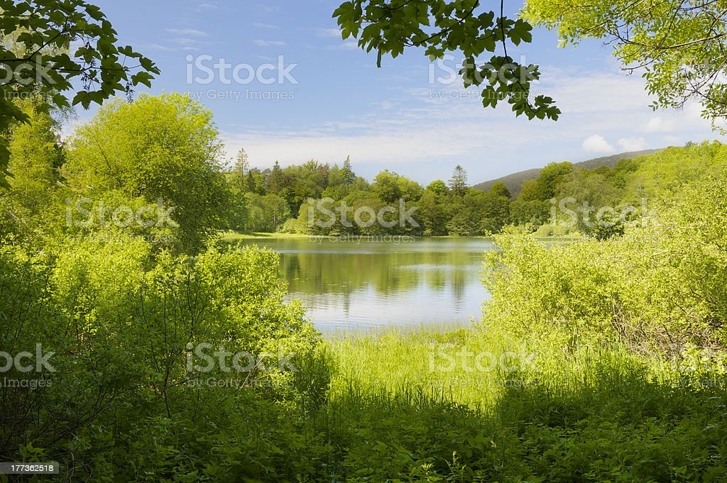 Green, fresh, lush foliage and small lake in spring royalty-free stock photo