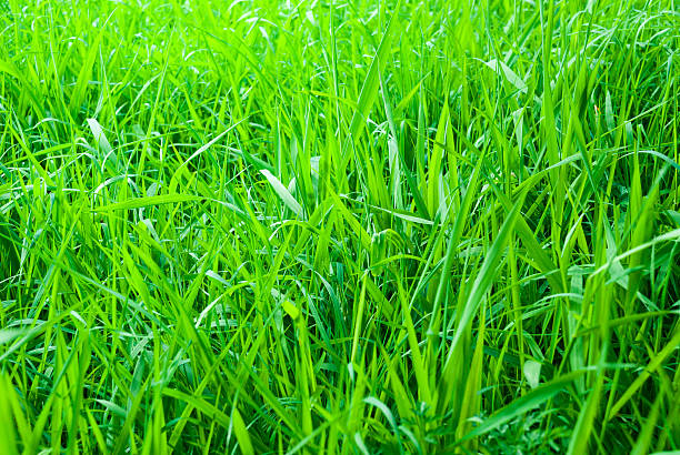 Green fresh Meadow Background – Foto