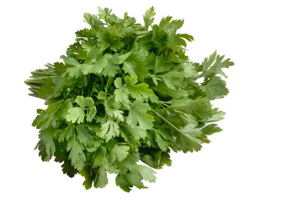 green fresh parsley isolated on white background. parsley bunch stock photo