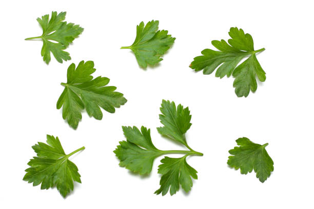 green fresh parsley leaf isolated on white background - parsley stock photos and pictures