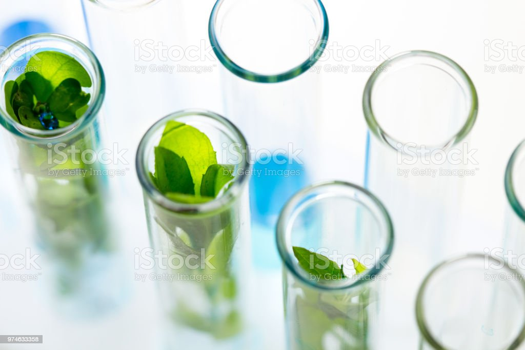 Green fresh plants grown up in test tubes in laboratory. royalty-free stock photo