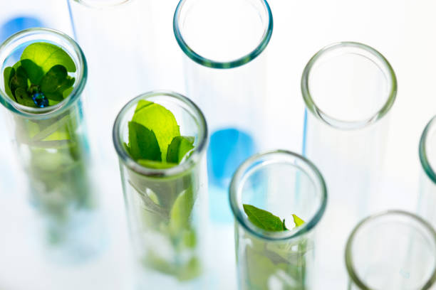 green fresh plants grown up in test tubes in laboratory. - laboratory glassware stock pictures, royalty-free photos & images