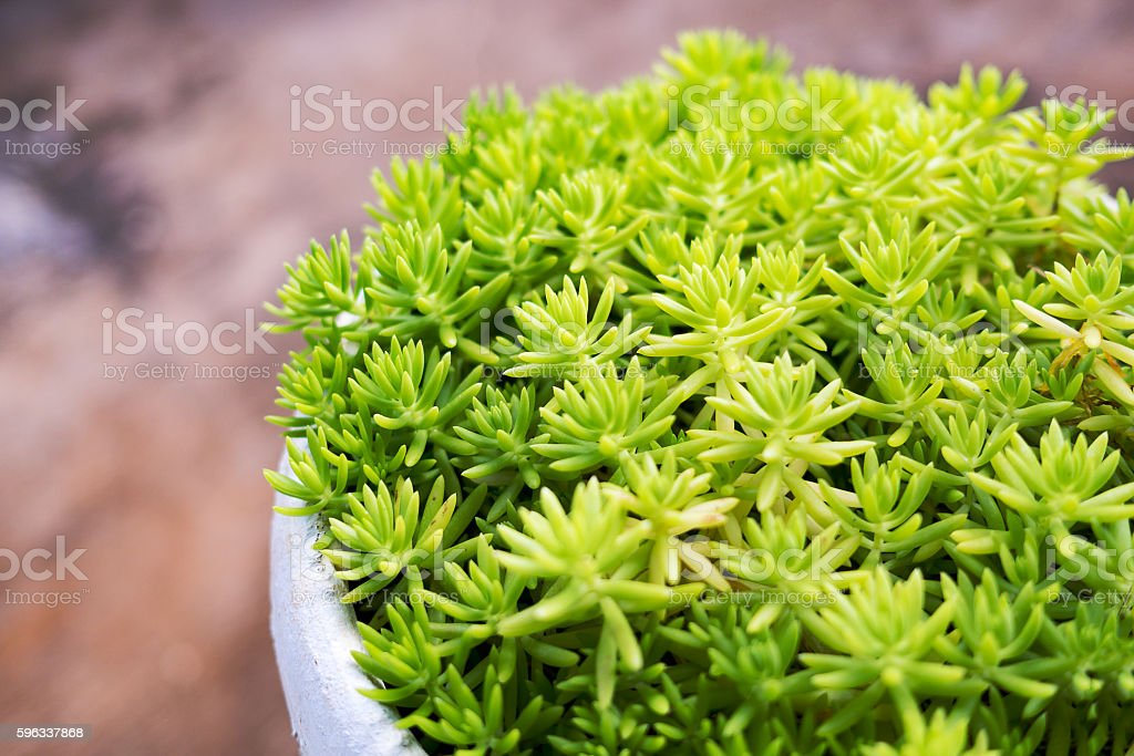 Green fresh plants in pot. Nature and grow up concept. royalty-free stock photo