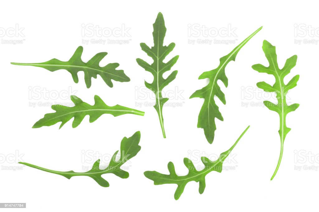 Green fresh rucola or arugula leaf isolated on white background. Top view. Flat lay pattern stock photo