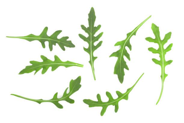 녹색 신선한 rucola 또는 arugula 잎 흰색 배경에 고립. 최고의 볼 수 있습니다. 평면 위치 패턴 - 아루굴라 뉴스 사진 이미지