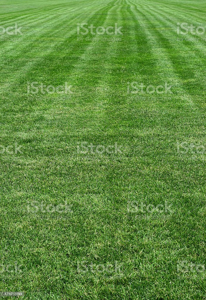 Green freshly mowed grass lawn royalty-free stock photo