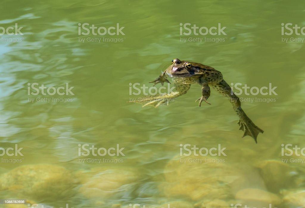 mh mh macht der grüne frosch