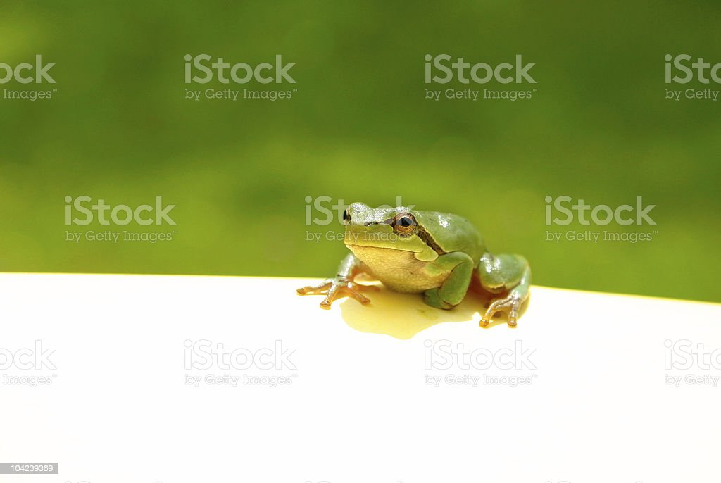 Green Frog Note stock photo