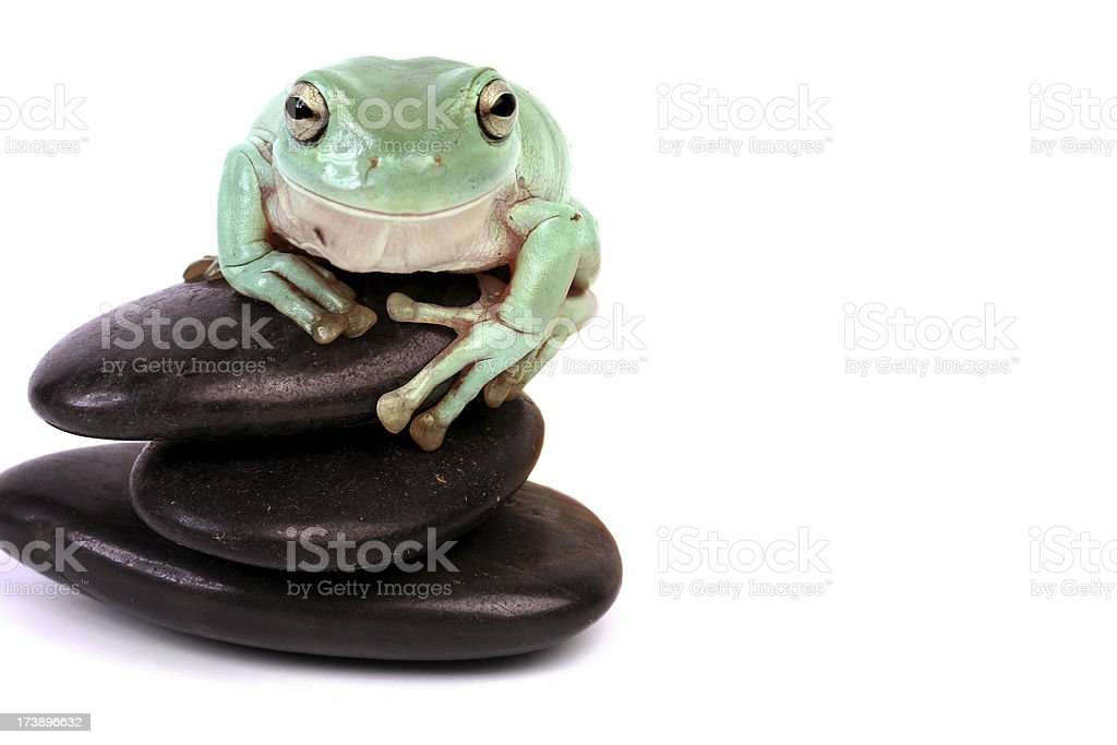 Green frog on Lava Stones. royalty-free stock photo