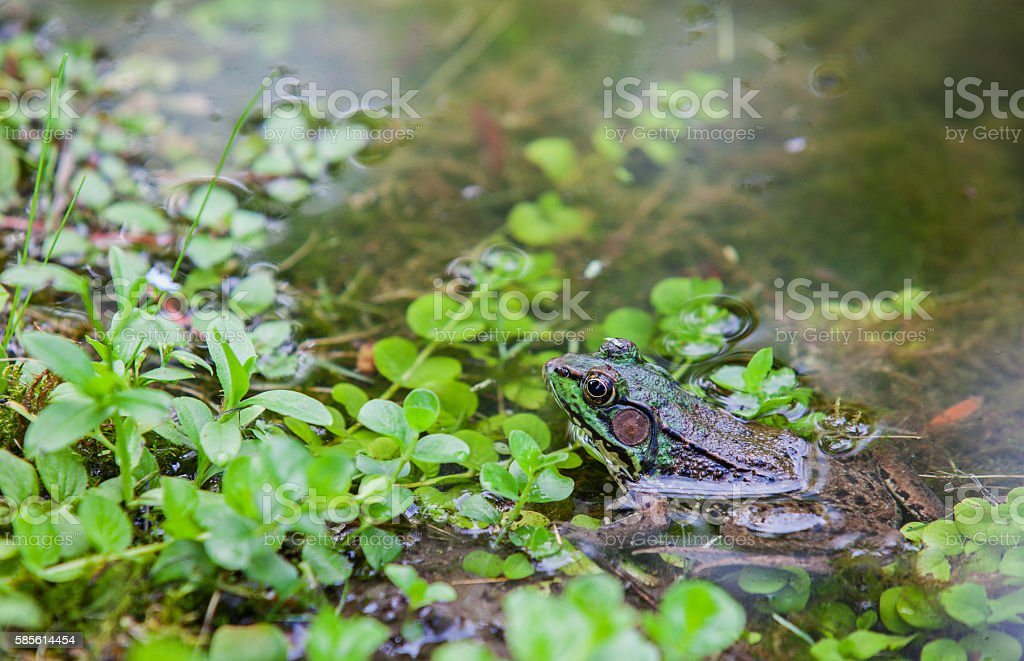 Green Frog Outdoors stock photo
